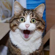 16 Immagini Strepitose Di Foto Di Gatti Divertenti Funny Cats