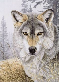 """"""" The wolf is the most charismatic and controversial of the large predators living in Europe today ; few animals have had such a powerful influence on our imaginations, or have been so feared and misunderstood ."""" wolvesandhumans,org Al Agnew art licensor. ...."""