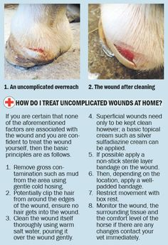 Veterinary surgeon Nicola Walsh MVB has excellent advice for owners when dealing with wounds