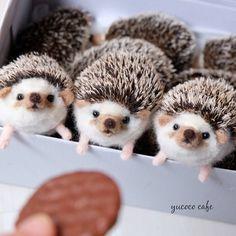 Cute Needle felting project wool cute animals hedgehogs(Via @yucococafe)