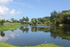 The pond we'll be walking around every morning in December 2012!  Tropical pond at CSS | Jamaica