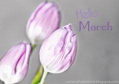 Hello March | Hello March!