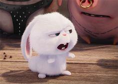 The secret life of pets -snowball Cute Disney Wallpaper, Wallpaper Iphone Cute, Cute Cartoon Wallpapers, Cute Memes, Funny Cute, Snowball Rabbit, Rabbit Wallpaper, Pets Movie, Cute Bunny Cartoon