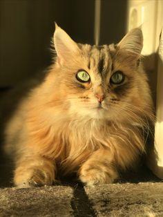 Lucy Katt
