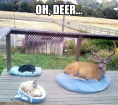 Unexpected guest // funny pictures - funny photos - funny images - funny pics - funny quotes - #lol #humor #funnypictures