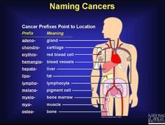 Scientists use a variety of technical names to distinguish the many different types of carcinomas, sarcomas, lymphomas, and leukemias. In general, these names are created by using different Latin prefixes that stand for the location where the cancer began its unchecked growth.