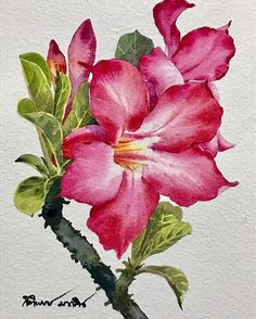 Watercolor And Ink, Watercolour Painting, Watercolor Flowers, Acrylic Tutorials, Watercolour Tutorials, Art Floral, Acrylic Painting Flowers, Watercolor Pictures, Botanical Art