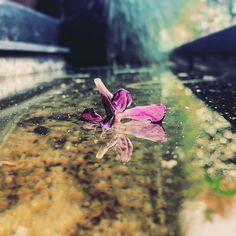 Always floating. #life #botd #sero #loves #za #bestofthefay #flower #water #nature #purple #vsco #shotoniphone Vsco, Water, Photography, Animals, Instagram, Gripe Water, Photograph, Animales, Animaux