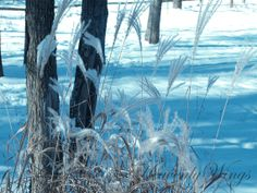Winter Wisps 8x10 Photography Blue White and by HeavenlyWings, $25.00