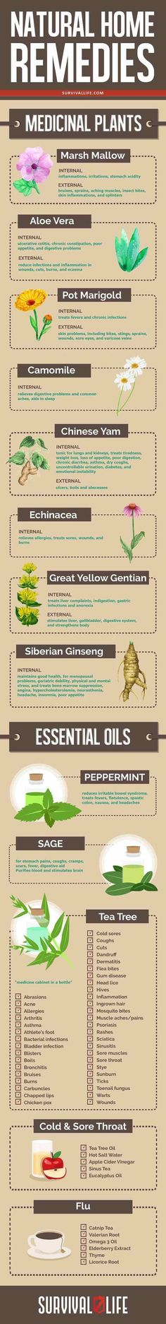 Natural home remedies.Medicinal plants are crucial to your health and wellness in a survival situation. Get to know the 11 medicinal plants you can grow in your backyard! Natural Health Remedies, Natural Cures, Natural Healing, Herbal Remedies, Holistic Healing, Natural Treatments, Survival Life, Survival Food, Survival Hacks