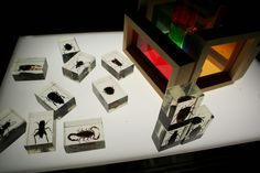 Plexiglass bugs