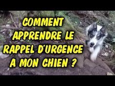 Comment apprendre le rappel d'urgence à mon chien ? - YouTube