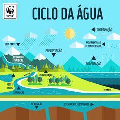 BIOLOGIA PARA CONCURSOS: Ciclo da Água