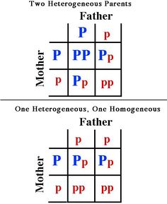 Punnett Square: a diagram used to predict the outcome a inheriting a trait from a parent