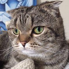 Neesaa  Cat | Pawshake