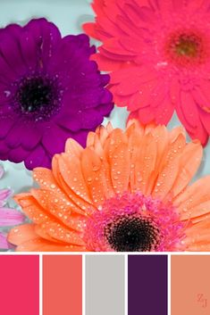 ZJ Colour Palette 962 #colourpalettes #colourinspiration Color Schemes Colour Palettes, Bright Color Schemes, Paint Color Schemes, Fall Color Palette, Colour Pallette, Color Combos, Design Seeds, World Of Color, Color Stories