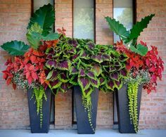 Front Porch Flower Planter (Front Porch Flower Planter) design ideas and photos - Front Porch Flower Planter Ideas 27 (Front Porch Flower Planter Ideas design ideas and photos - Container Flowers, Container Plants, Container Gardening, Plant Containers, Gardening Vegetables, Outdoor Planters, Garden Planters, Tall Planters, Porch Garden