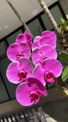 Flor Iphone Wallpaper, Blue Orchids, Sky Aesthetic, Landscape Photography, Beautiful Places, Pretty, Plants, Flower, Autumn
