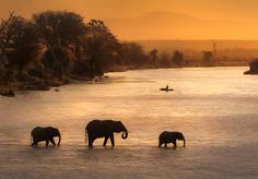 A group of elephants cross peacefully the mighty Ewaso Ngiro river in Samburu N. (Kenya) just befo. - Photograph and caption by Theodore Mattas, 2018 National Geographic Travel Photographer of the Year African Animals, African Safari, Claude Monet, Group Of Elephants, National Geographic Travel, Reserva Natural, Before Sunset, Kruger National Park, Travel Aesthetic