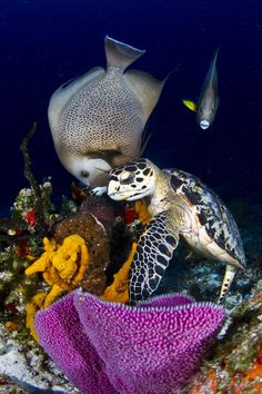 Turtle and Angel Fish