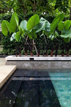 Having a pool sounds awesome especially if you are working with the best backyard pool landscaping ideas there is. How you design a proper backyard with a pool matters. Outdoor Pool, Outdoor Spaces, Outdoor Gardens, Outdoor Living, Pool Landscape Design, Landscape Architecture, Landscaping Design, Residential Landscaping, Landscaping Company