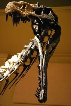 Suchomimus - Wikipedia, the free encyclopedia