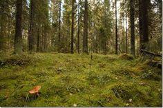 Teuvon kuvat -Teuvo images: Suomalainen metsä kuva, Myös ...