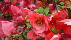 Şifalı bitkiler - alpturks.com - BOYUN TUTULMASI