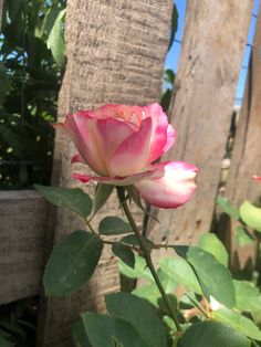 Plants, Roses, Plant, Planets