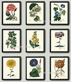 Botanical Print Set of 9 Antique EDW Beautiful Flowers Province Rose Passion Fruit White Jasmine Tea Blue Morning Glory Yellow Calendula Fox-Glove Purple Phlox Plants Art Unframed. Beautiful set of 9 prints based on antique botanical illustrations from 1785. Wonderful details, colors and natural history feel. • The prints measure 4x6, 5x7, 8x10, or 11x14 inch. based on your selection come with a white border for easy framing. • Printed on professional artist archival matte paper. • The...