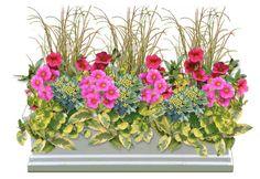 Indian Summer Window Box - Sun  Thriller - Leaf Sedge (or other grass)  Filler - Cherry Pink Million Bells, Bellania Bea, Salvia  Spiller - Lysimachia