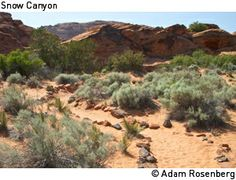 Snow Canyon State Park, St. George, Utah.  Easy to moderate trails, red rocks, black lava rock caps, and camping.  What's not to love.