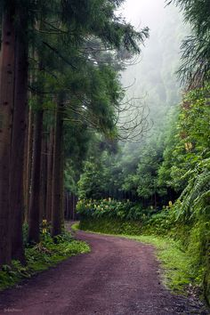 Botanical forest at Nordeste, Sao Miguel, Azores, Portugal  Explore the Beauty of the Islands at HobbyEarth