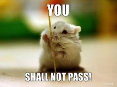 Gandalf Hamster