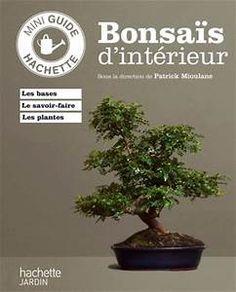 Olives in pot   Container Gardening   Pinterest   Bonsai, Fruit ...