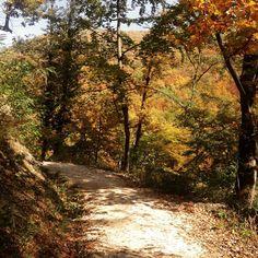 A trail in the woods Zagreb Croatia, Woods, Trail, Hiking, Sunday, Country Roads, Instagram, Walks, Domingo