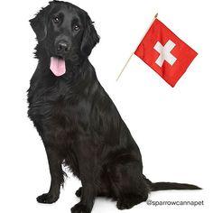 Labrador Retriever, Pets, Animals, Instagram, Summer Recipes, Labrador Retrievers, Animals And Pets, Animales, Animaux