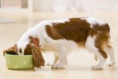 Choosing a feeding method for your dog