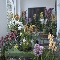 Landscape Gardeners Are Like Outside Decorators! A Thrilling Grouping Of Exotic Orchids From Mcbean's Established In Large Indoor Plants, Big Plants, Tall Plants, House Plant Care, House Plants, Container Plants, Container Gardening, Orchid Nursery, Winter Crops