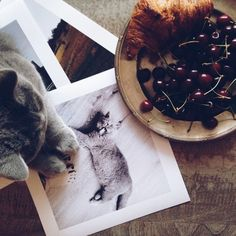 Beautiful photo prints from your Instagram images - http://inkifi.com/create-prints/photo-prints.html  #instagram #prints #cats