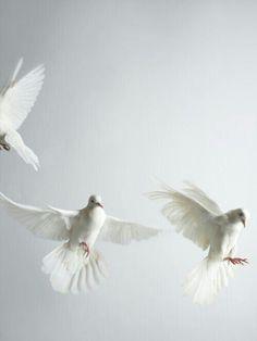 White paz