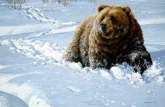 Fine Art and Custom Framing Bear Paintings, Wildlife Paintings, Wildlife Art, Harp Seal Pup, Bear Species, Black Bear Cub, Bear Art, Brown Bears, Art Pics
