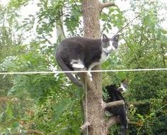 cats in trees - Google Search