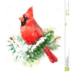 Cardinal Bird Watercolor Winter Christmas Illustration Hand Painted - Download From Over 49 Million High Quality Stock Photos, Images, Vectors. Sign up for FREE today. Image: 63484405