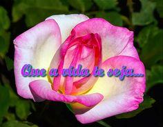 Que a vida te seja... Clique: http://mestresdasgerais.blogspot.com.br/2016/08/que-vida-te-seja.html