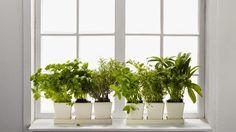 August 29 – More Herbs, Less Salt Day
