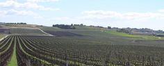 """#Vini, il #biologico per Milazzo è """"una scelta culturale"""""""