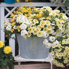 Confetti Garden Pineapple Punch Combination (pack of Pretty idea with white and yellow. I never think of white. The post Confetti Garden Pineapple Punch Combination (pack of appeared first on Easy flowers. Container Flowers, Container Plants, Container Gardening, Gardening Hacks, Gardening Supplies, Kitchen Gardening, Gardening Quotes, Garden Spaces, Garden Pots
