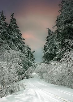 ✮ Winter