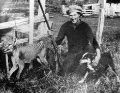 12/28: Day the Endangered Species Act was enacted (1973) | Proud Wilf Batty poses with the last wild Thylacine after he shot it